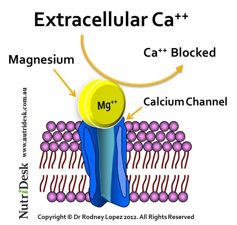 magnesium calcium channel blocker
